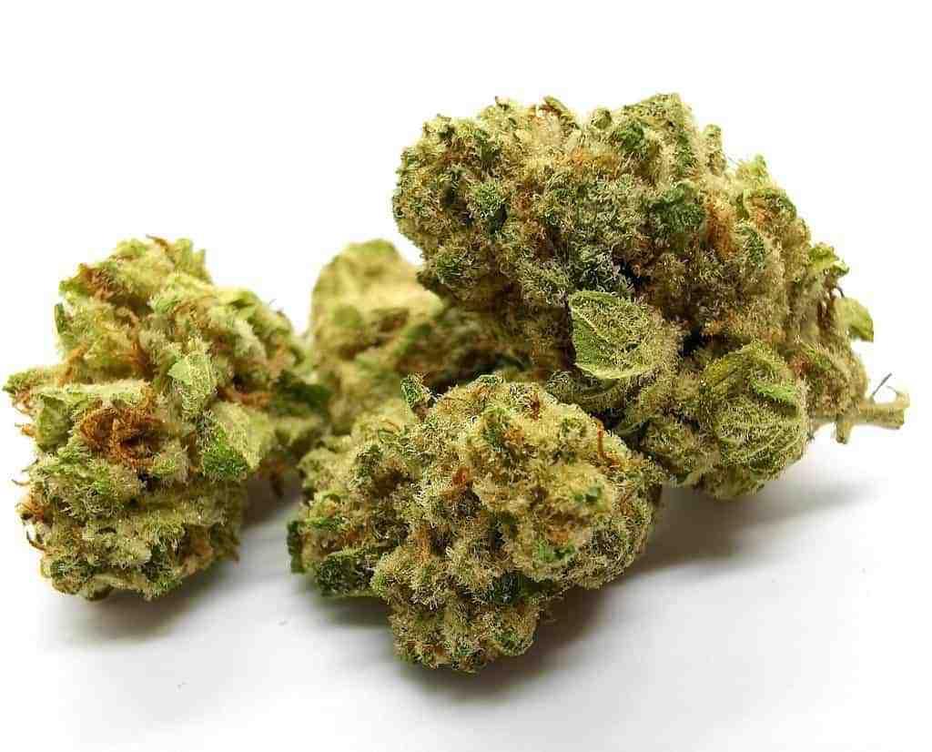 Tsunami Strain Review (cannabis picture
