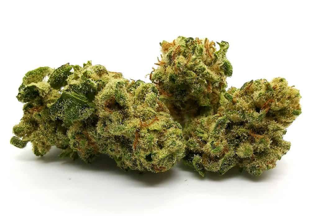 Tsunami Strain Review (cannabis picture