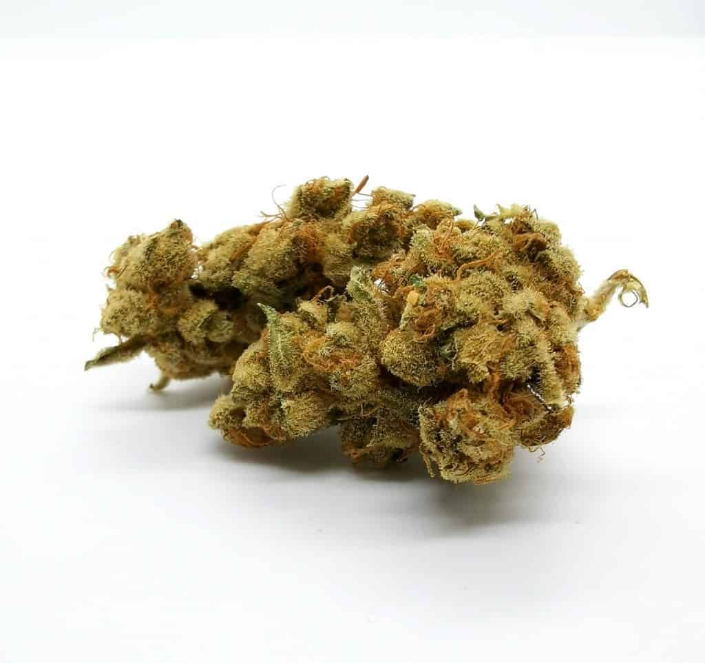 Galiano strain review, picture of cannabis.