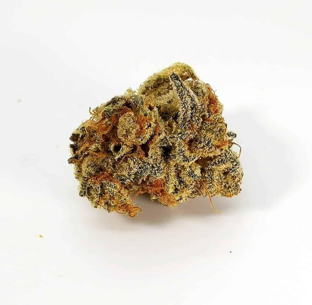 Quadra strain review, picture of cannabis