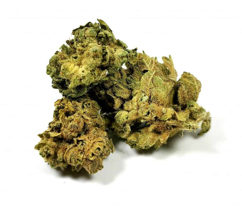 Monkey Glue Strain Review Picture of cannabis