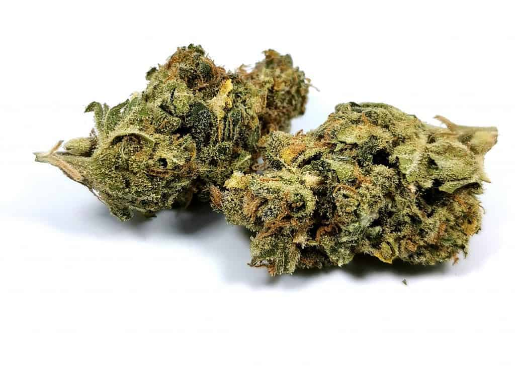 White russian strain review (picture of cannabis)