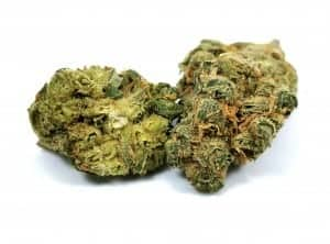 limelight strain review picture of cannabis flower by cannabis sensei
