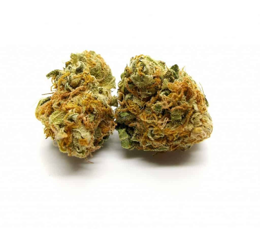 sensi star strain review (namaste) picture of cannabis taken by Cannabis Sensei