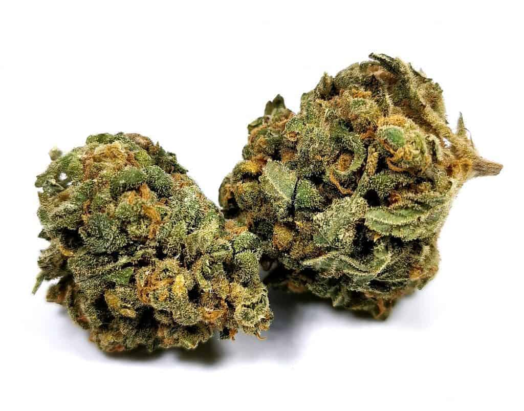 blue dream strain review picture of cannabis