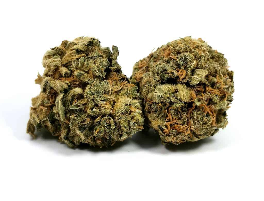 mk ultra strain review picture of cannabis