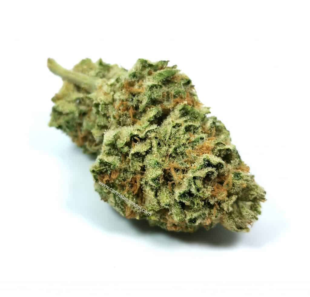 Lemon Garlic OG strain review, picture of cannabis