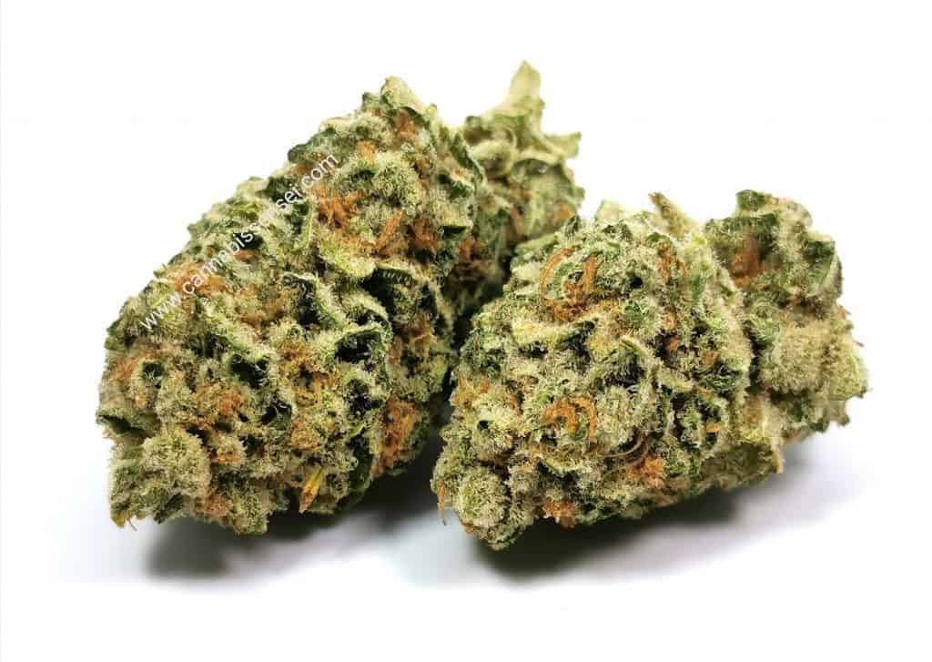 lemon garlic og strain review, picture of cannabis