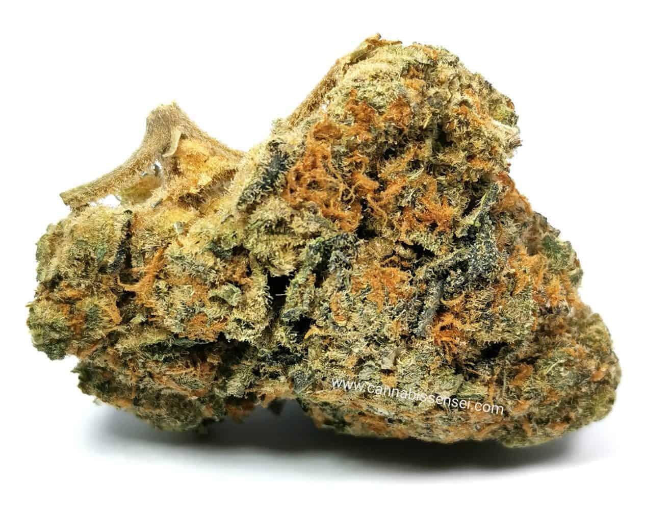 grapefrui GG4 strain review, pictur of cannabis