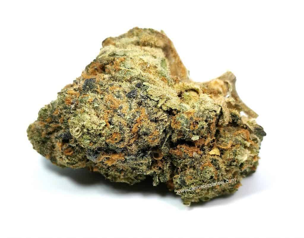 graperuit GG4 strain review, picture of cannabis