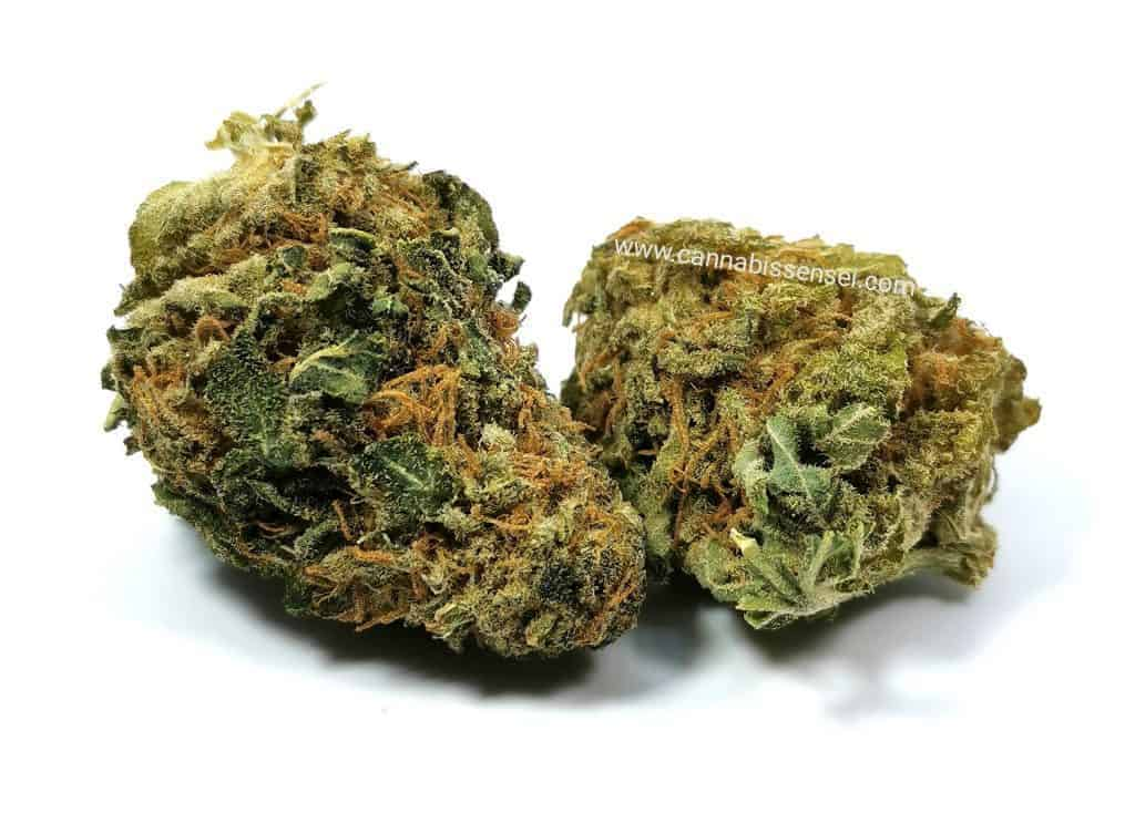 rockstar kush strain review picture of cannabis