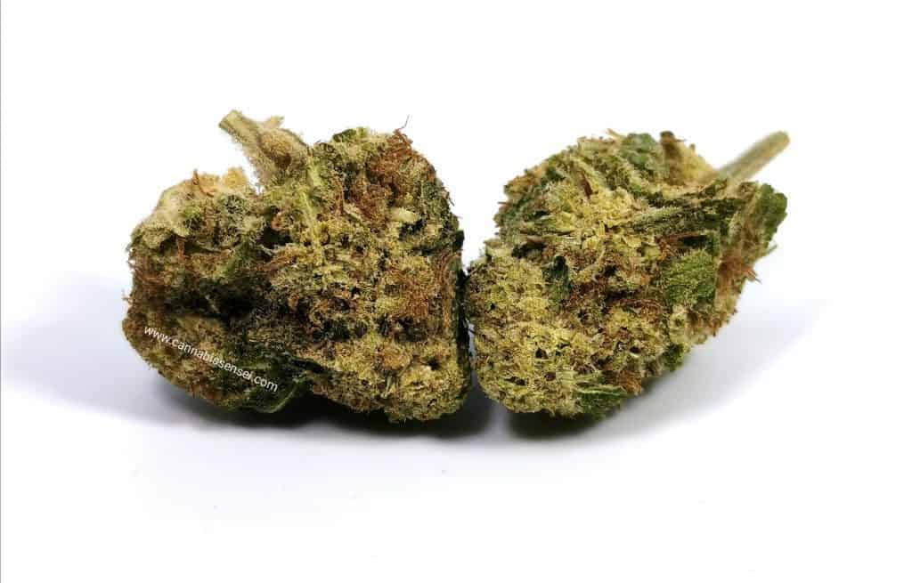 white widow strain review picture of cannabis