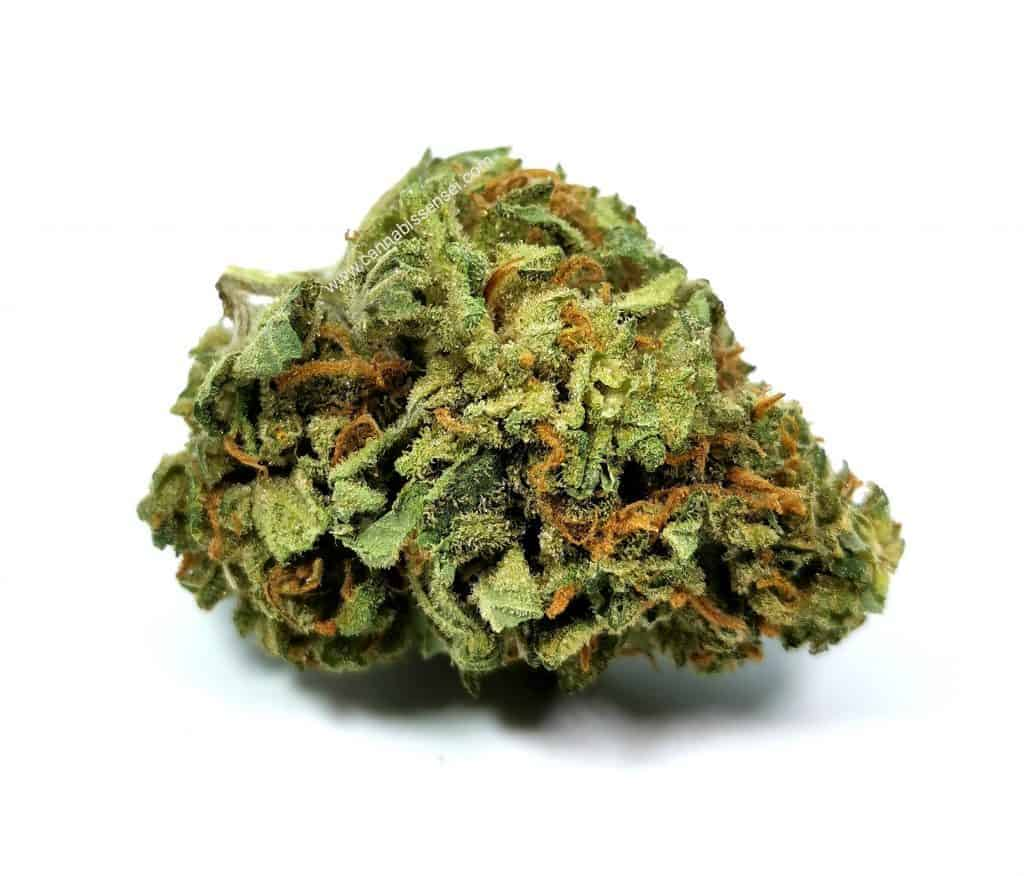 jean guy strain review, good supply