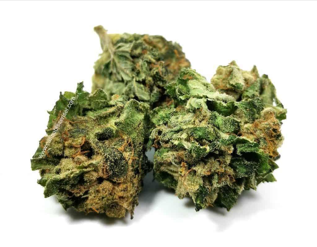green organic dutchman bio organic picture of cannabis