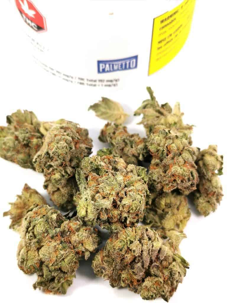 bandeau (headband) strain review picture of cannabis