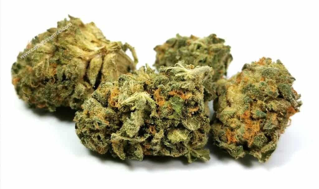 nuken strain review palmetto picture of cannabis