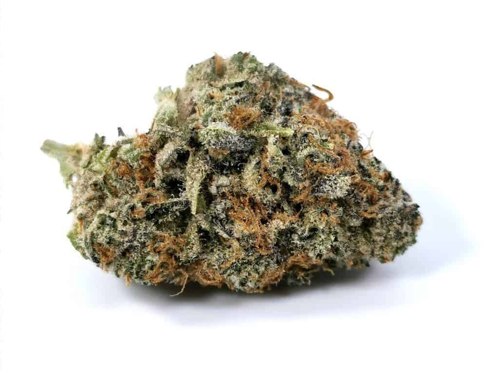 gelato mint pheno #5 review picture of cannabis