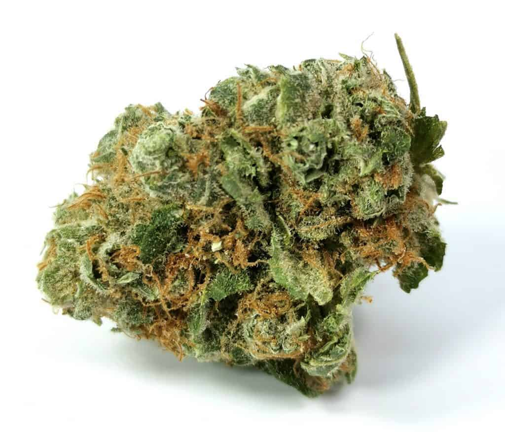 GG4 strain review shelter market picture of cannabis