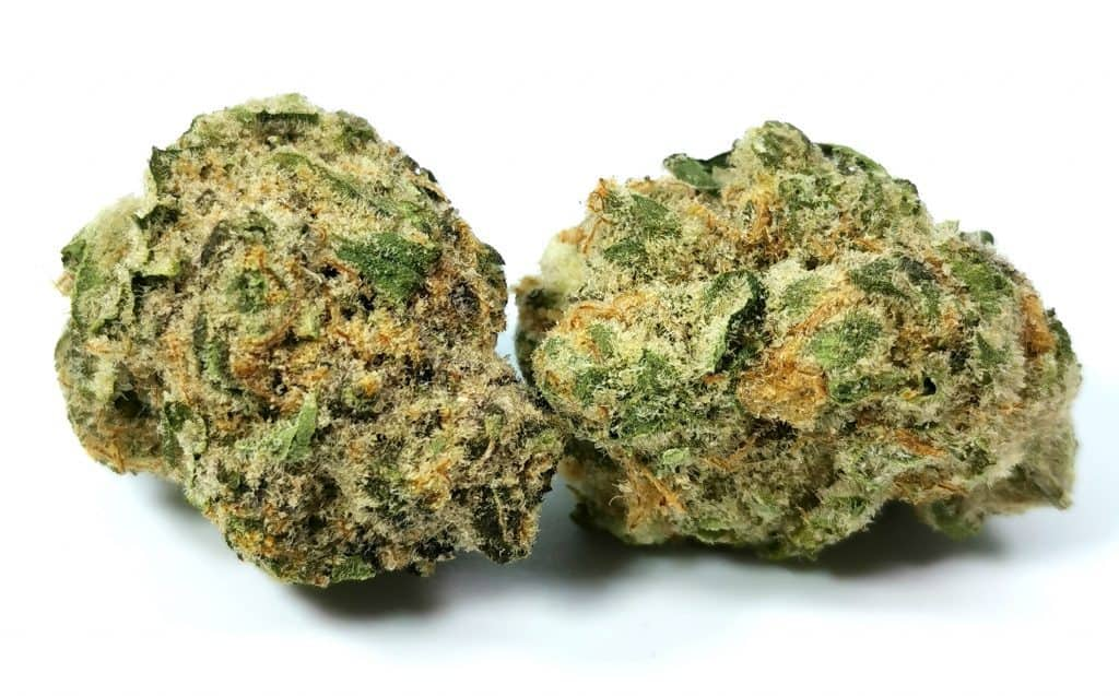 black cherry punch strain review picture of cannabis