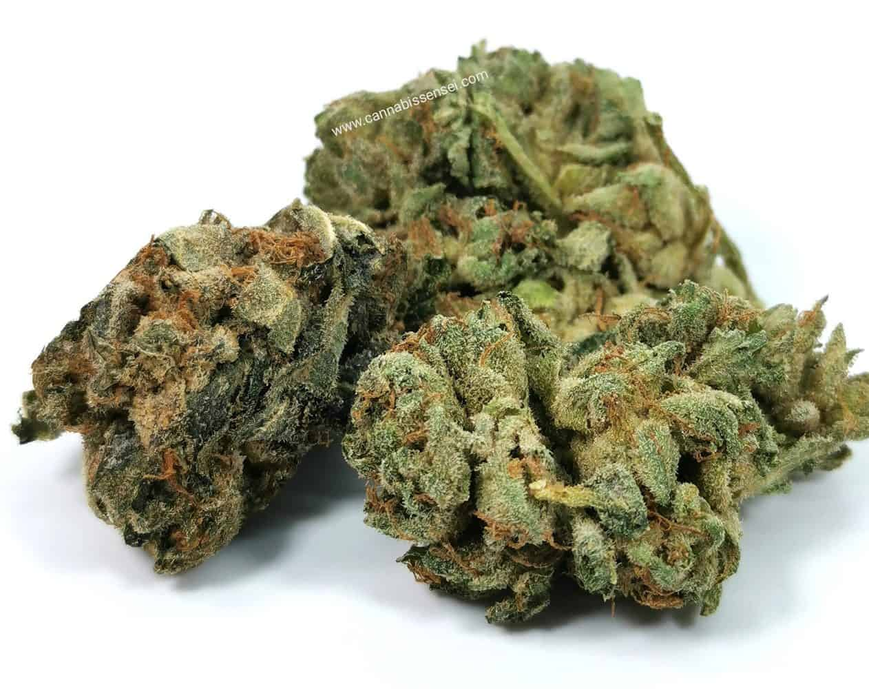 BC Sweet Skunk (Pure Laine Cannabis) picture of cannabis