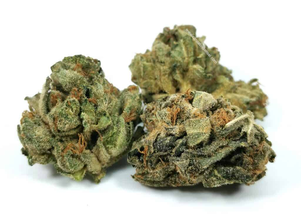 BC Sweet Skunk (Pure Laine Cannabis) review, picture of cannabis