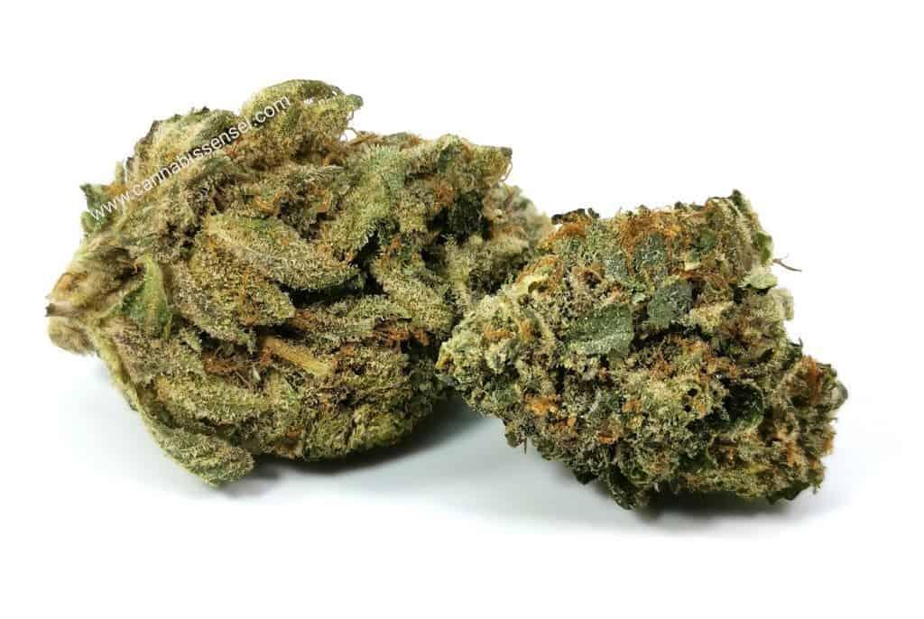 Island Pink Head review dunn cannabis