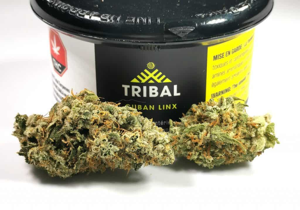 cuban linx strain review picture of cannabis and packaging