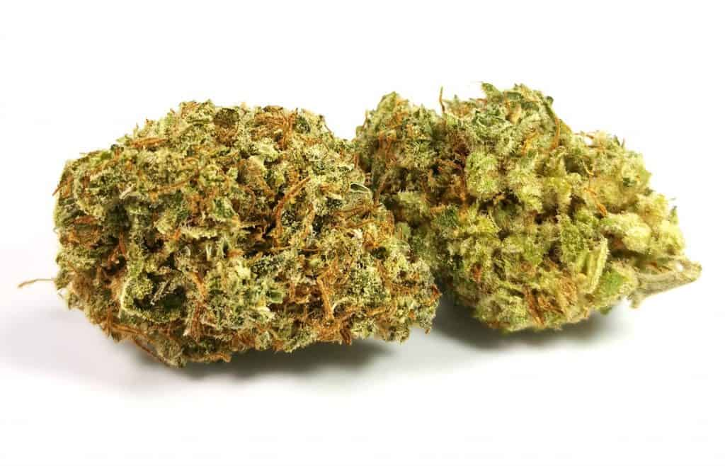 Lilac Diesel review, Organnicraft, picture of cannabis