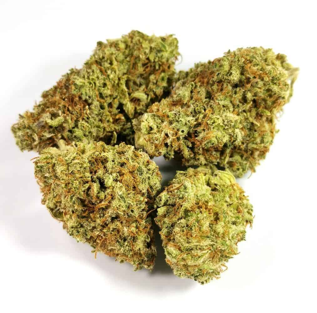 lilac diesel review picture of cannabis